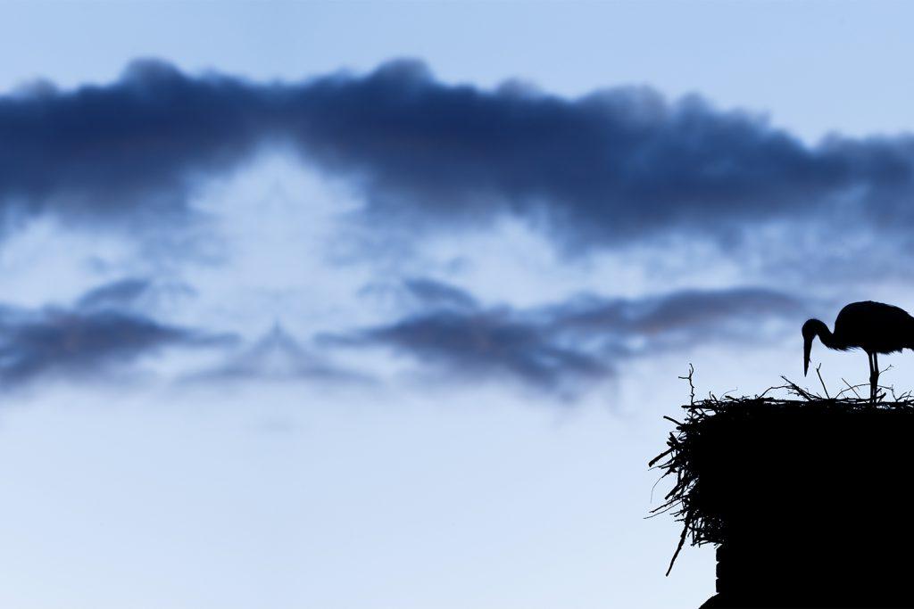 Storch als Silhouette